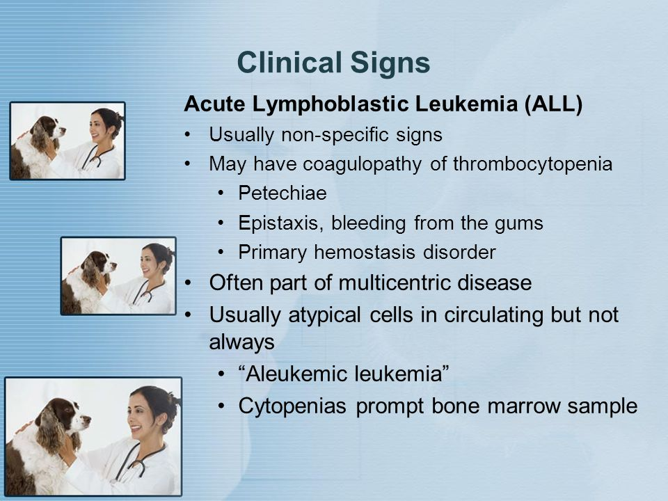 Clinical Signs Acute Lymphoblastic Leukemia (ALL)