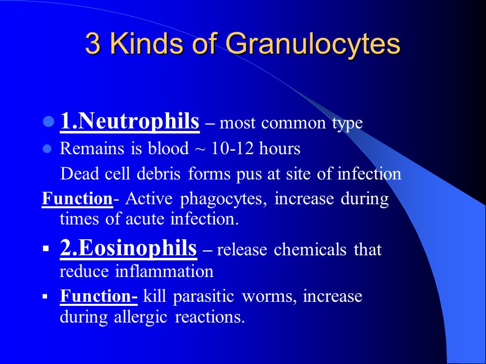 3 Kinds of Granulocytes 1.Neutrophils – most common type