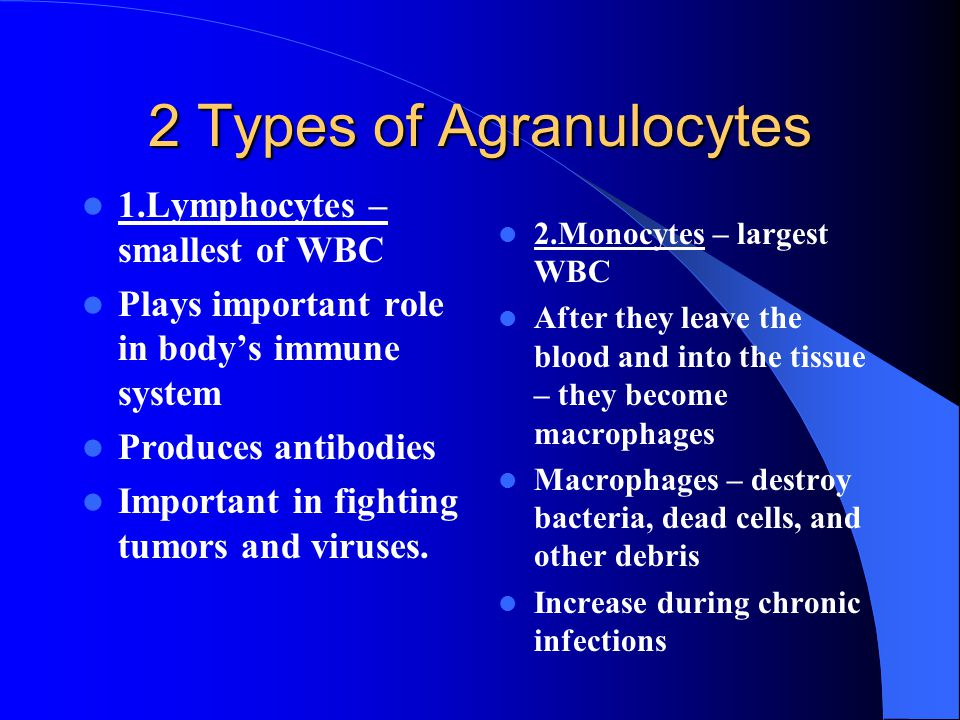 2 Types of Agranulocytes