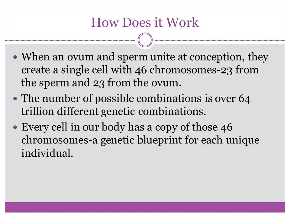 How Does it Work When an ovum and sperm unite at conception, they create a single cell with 46 chromosomes-23 from the sperm and 23 from the ovum.