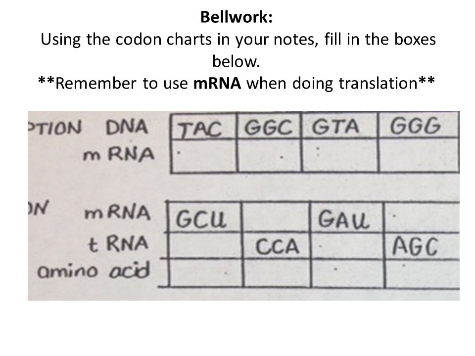 Bellwork: Using the codon charts in your notes, fill in the boxes below.