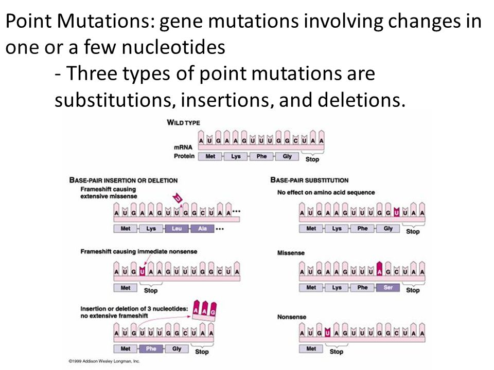 Point Mutations: gene mutations involving changes in one or a few nucleotides - Three types of point mutations are substitutions, insertions, and deletions.