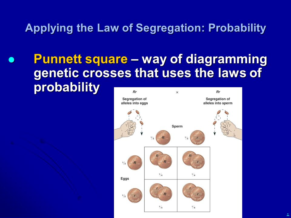 Applying the Law of Segregation: Probability