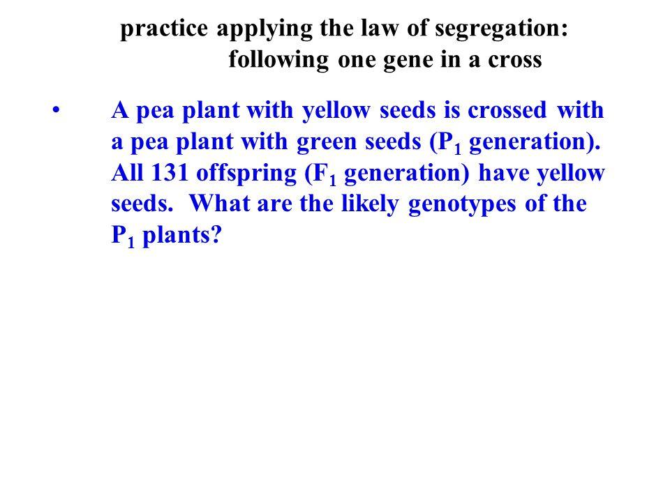 practice applying the law of segregation: following one gene in a cross