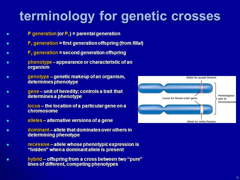 terminology for genetic crosses