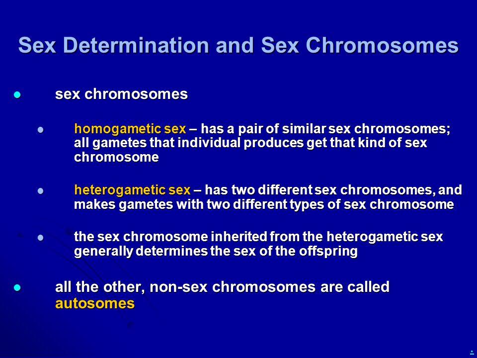 Sex Determination and Sex Chromosomes