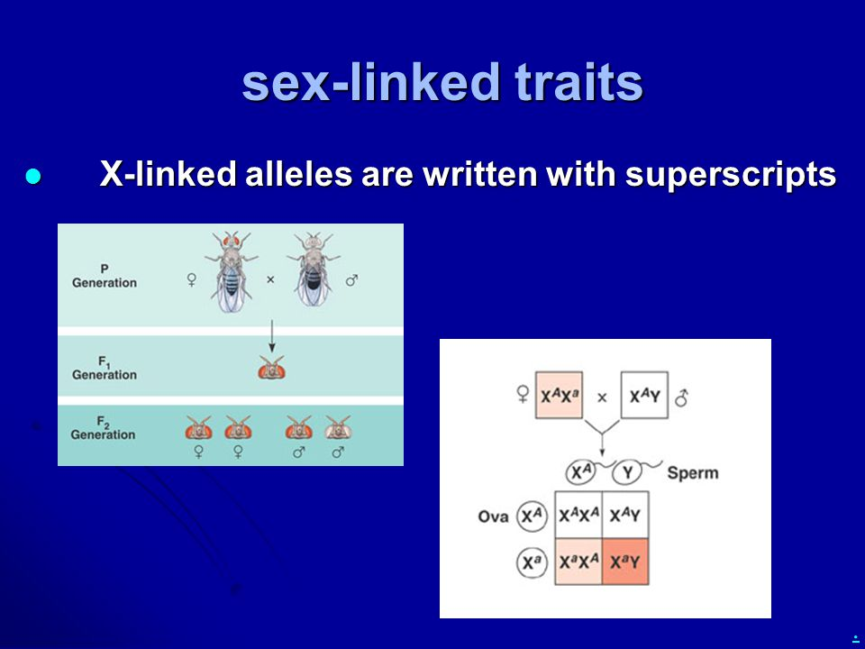 sex-linked traits X-linked alleles are written with superscripts