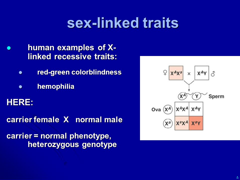 sex-linked traits HERE: human examples of X-linked recessive traits: