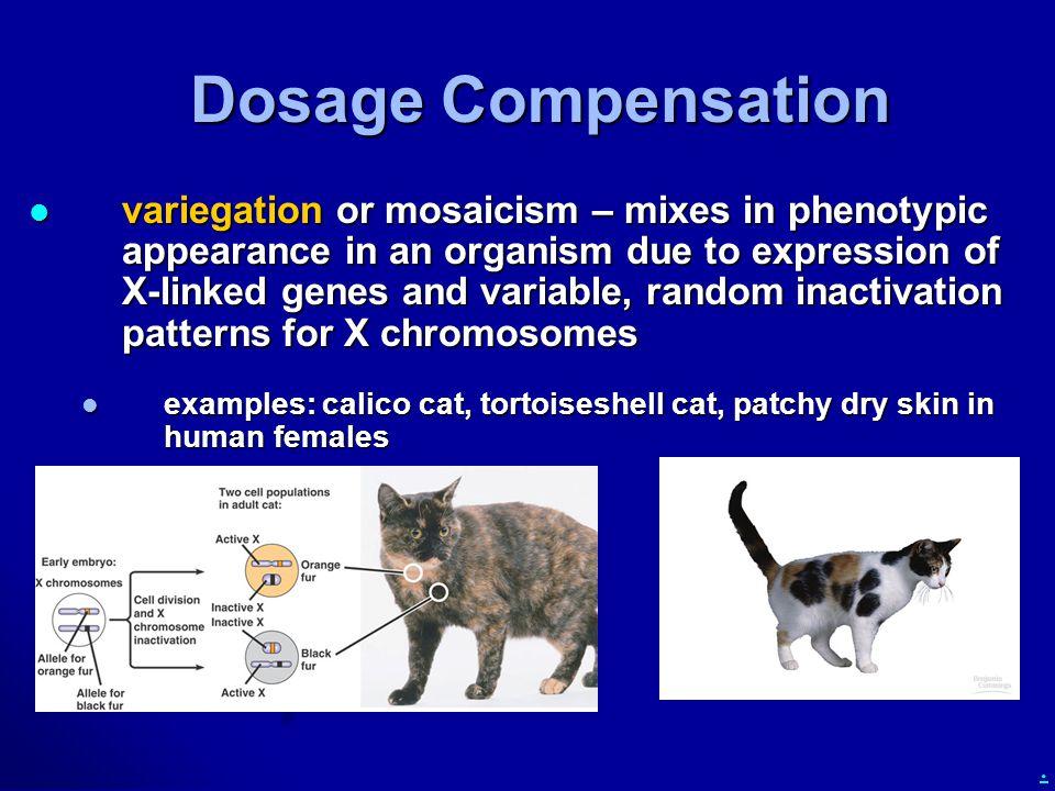 Dosage Compensation