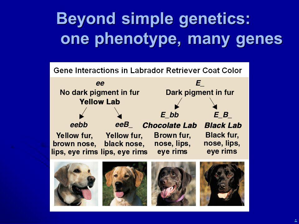 Beyond simple genetics: one phenotype, many genes