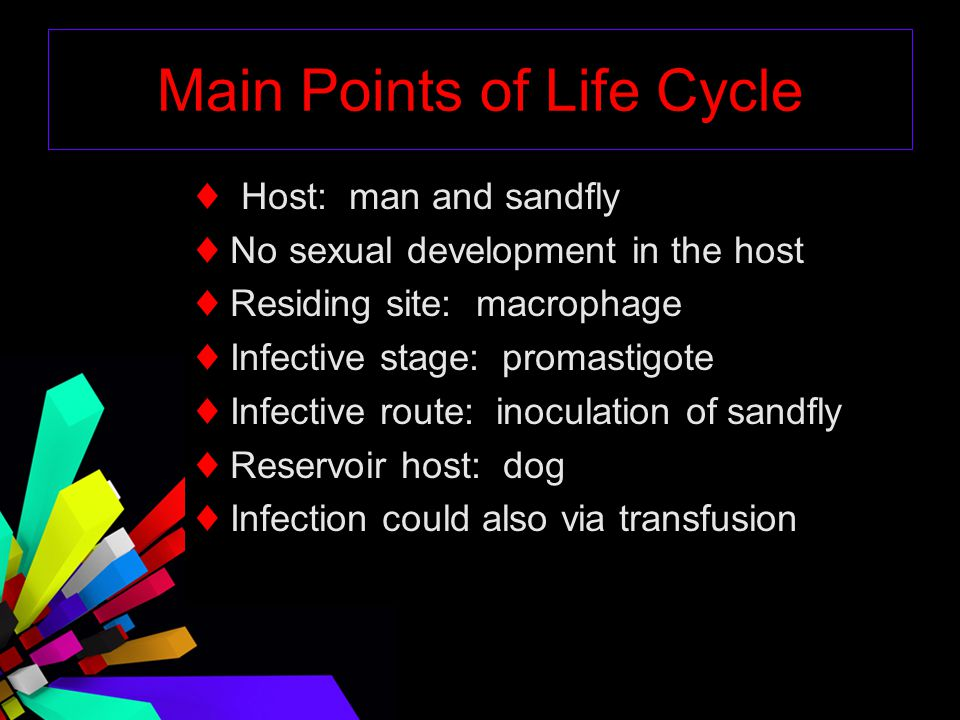 Main Points of Life Cycle
