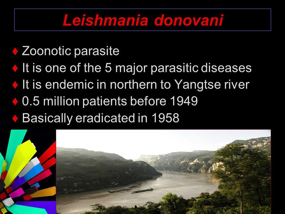 Leishmania donovani ♦ Zoonotic parasite