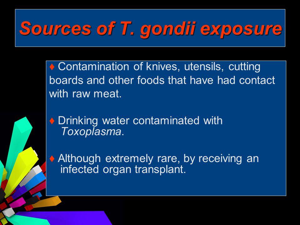 Sources of T. gondii exposure