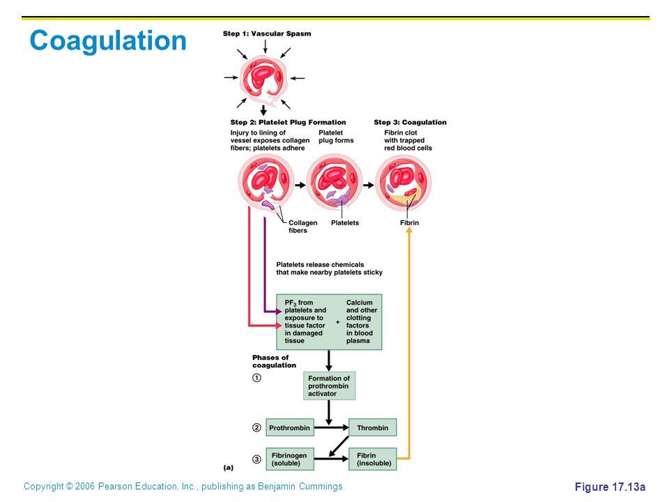 Coagulation Figure 17.13a