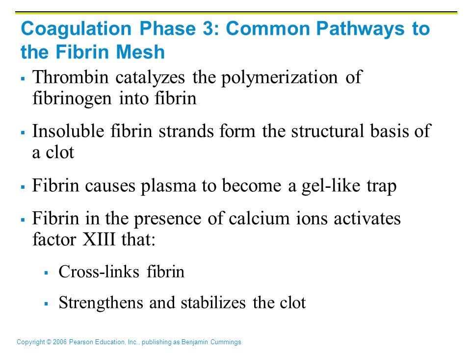 Coagulation Phase 3: Common Pathways to the Fibrin Mesh