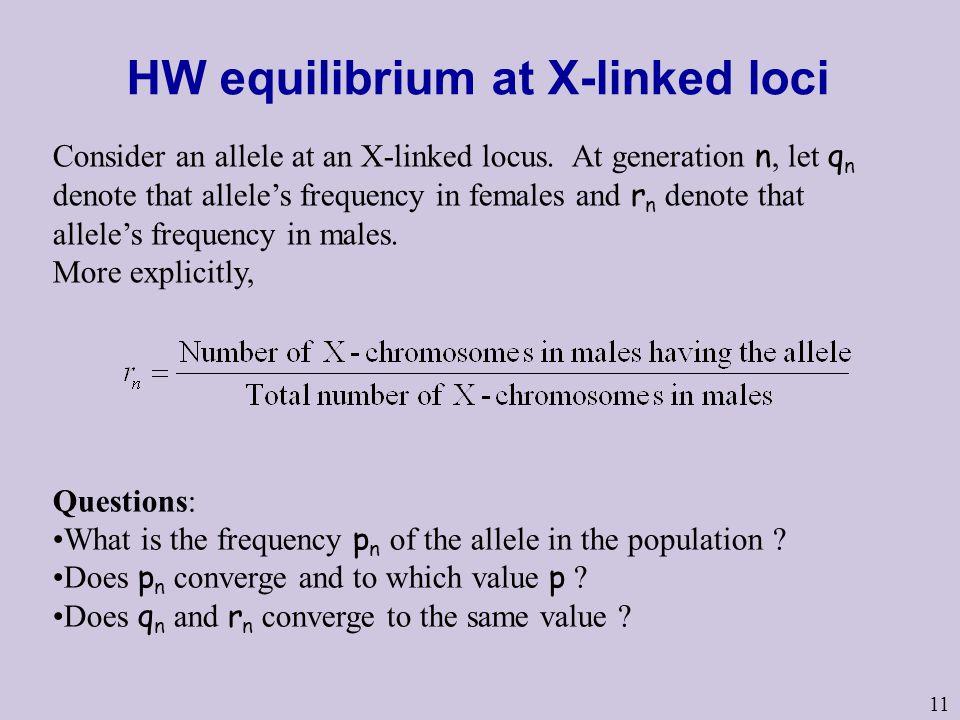 HW equilibrium at X-linked loci