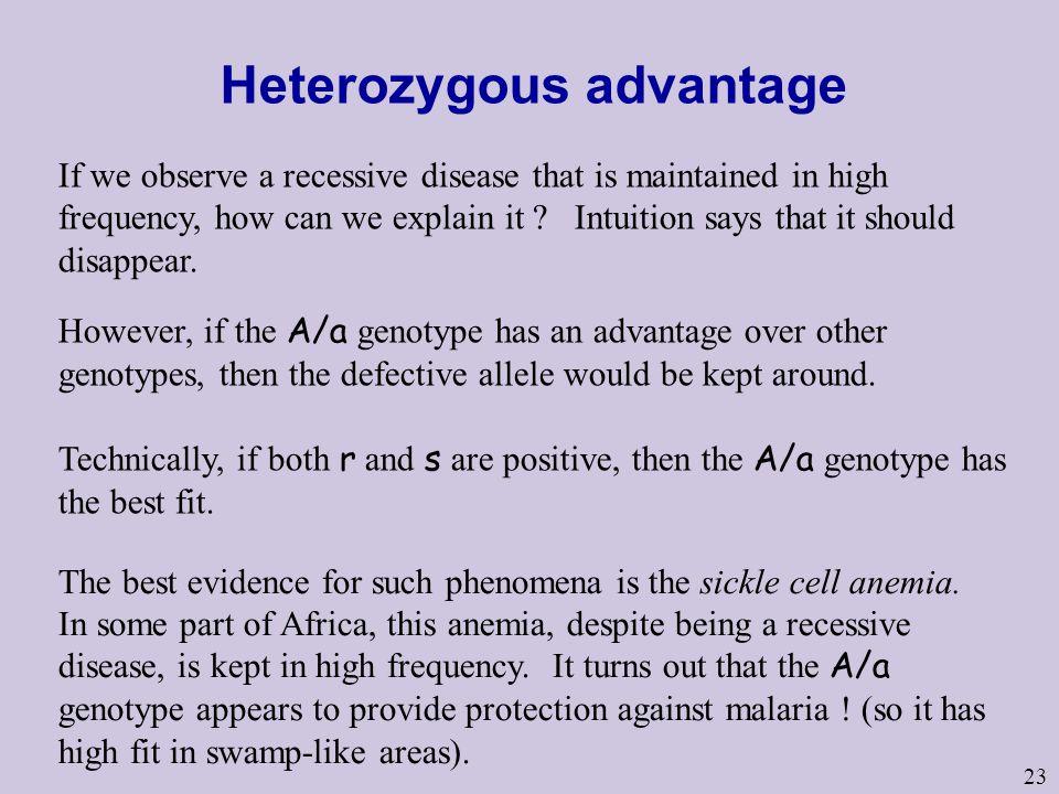 Heterozygous advantage