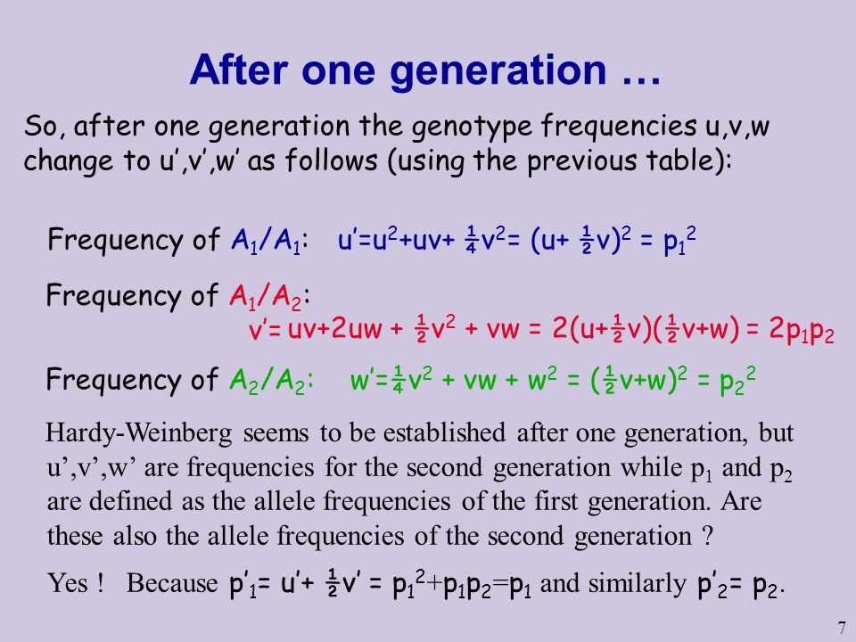 After one generation … So, after one generation the genotype frequencies u,v,w change to u',v',w' as follows (using the previous table):