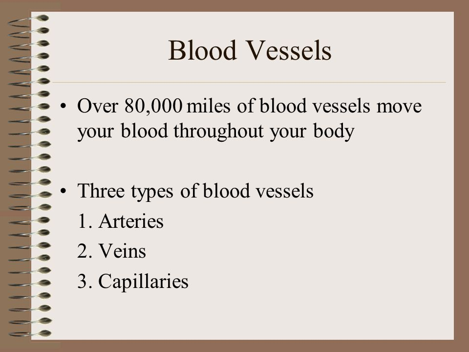 Blood Vessels Over 80,000 miles of blood vessels move your blood throughout your body. Three types of blood vessels.