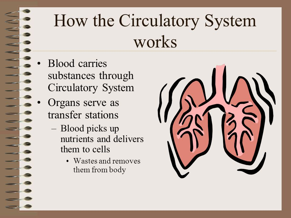 the description of how the circulatory system works in the body How does the circulatory system work your heart is the pump for your circulatory system it is made of muscle and contracts in order to pump blood through your body the arteries and veins are the roadways through which blood is transported to all parts of your body arteries carry oxygen-rich blood from your heart to the rest of your body.