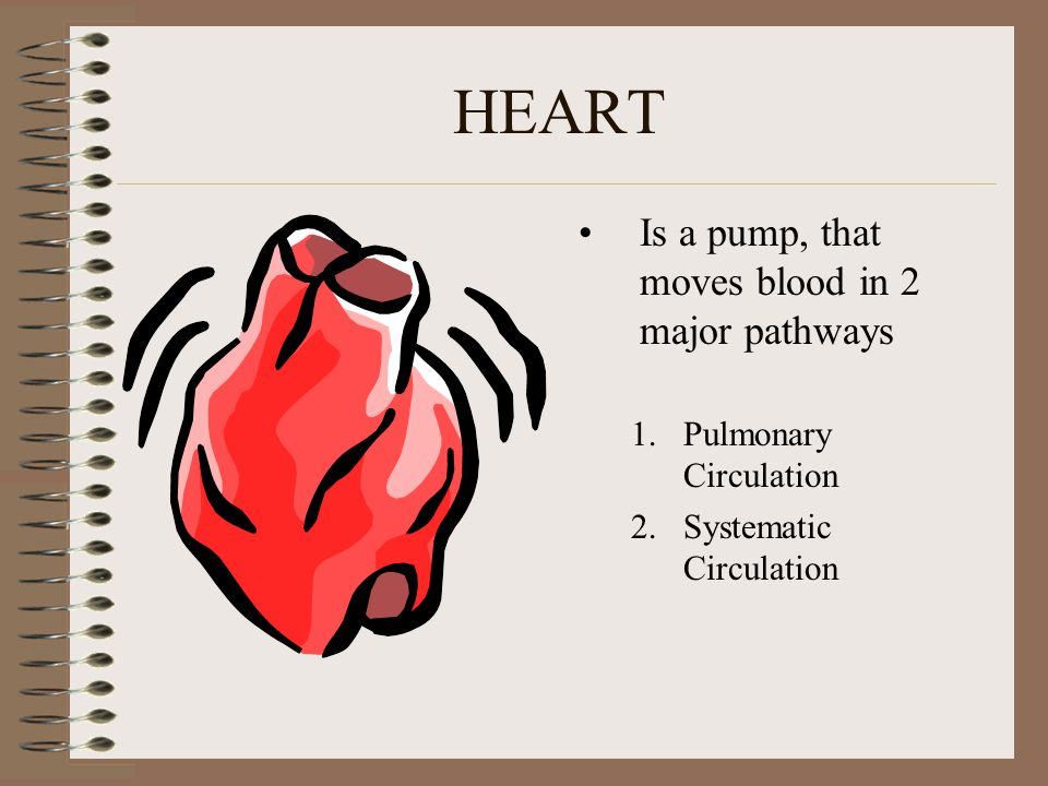HEART Is a pump, that moves blood in 2 major pathways