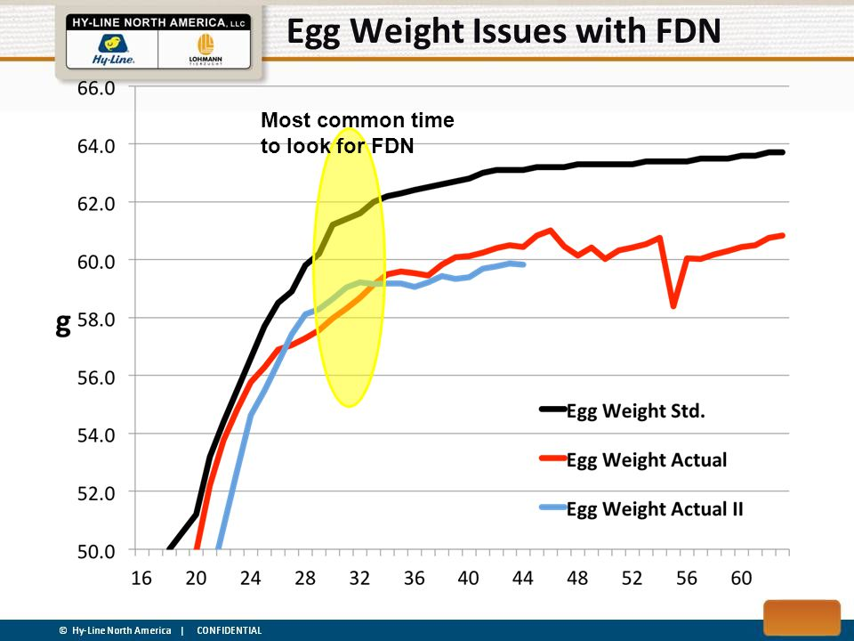Egg Weight Issues with FDN