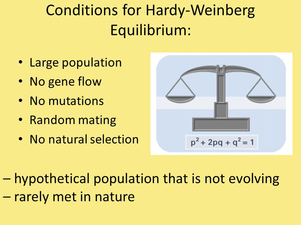 Conditions for Hardy-Weinberg Equilibrium:
