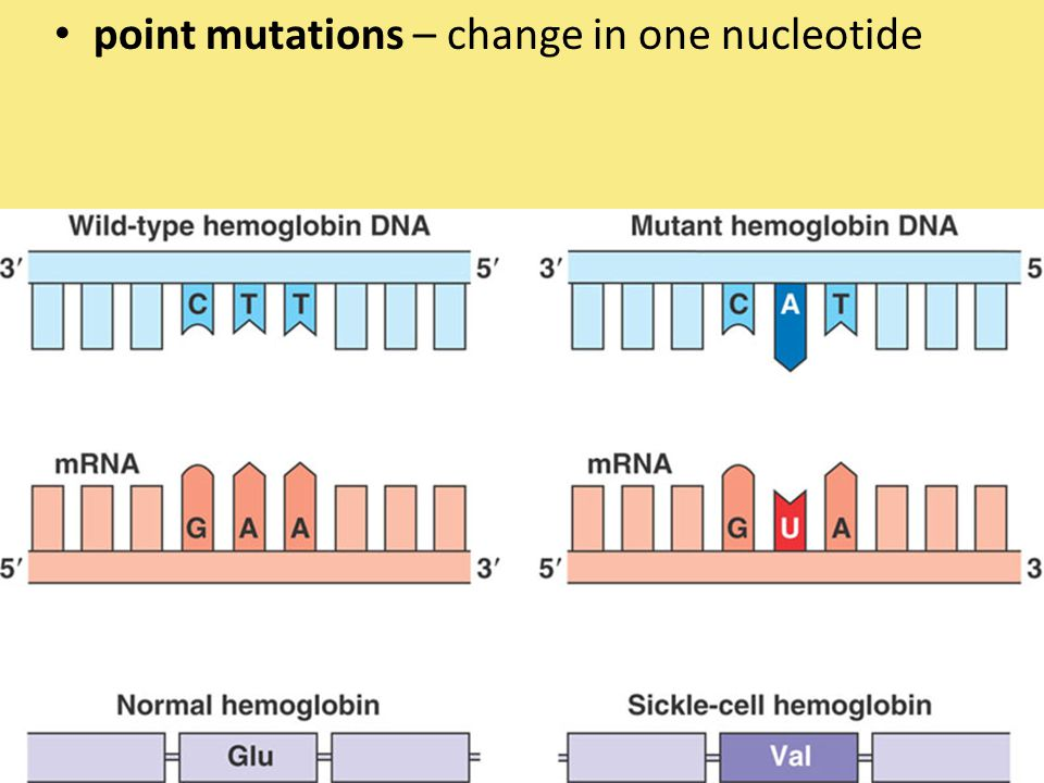 point mutations – change in one nucleotide