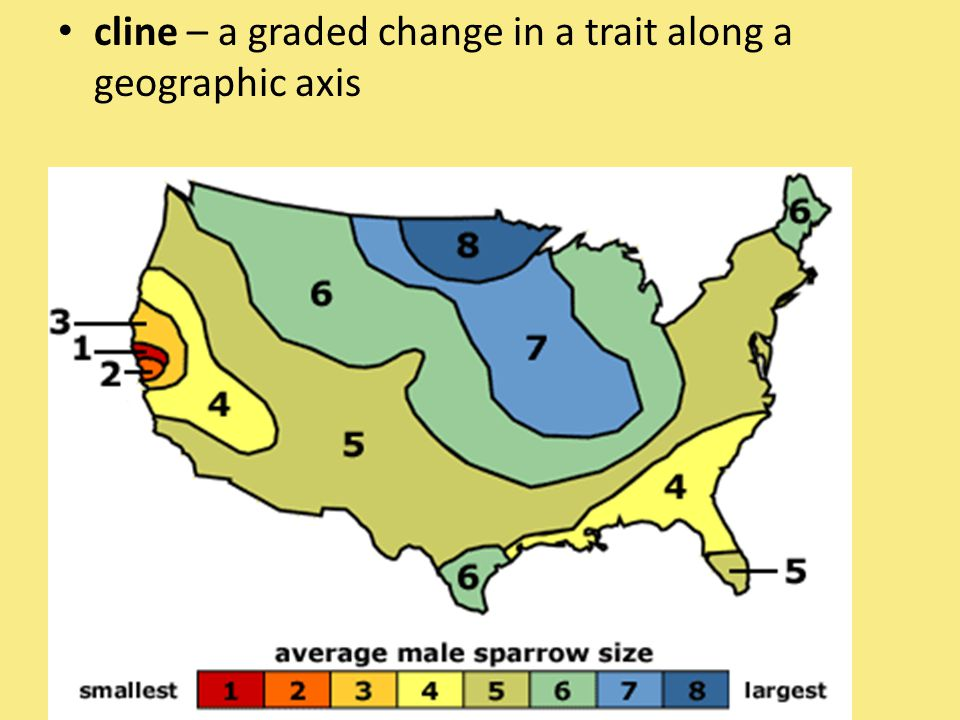 cline – a graded change in a trait along a geographic axis