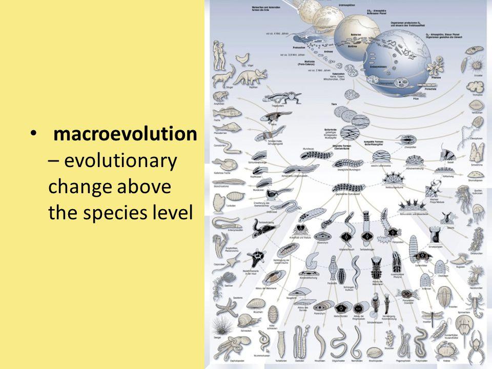 macroevolution – evolutionary change above the species level