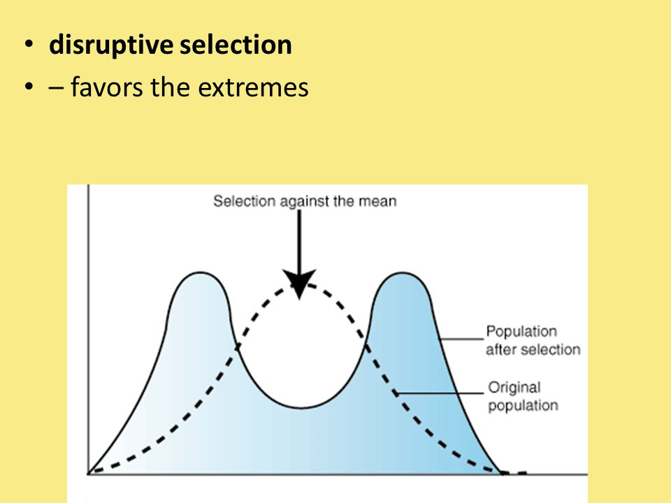 disruptive selection – favors the extremes
