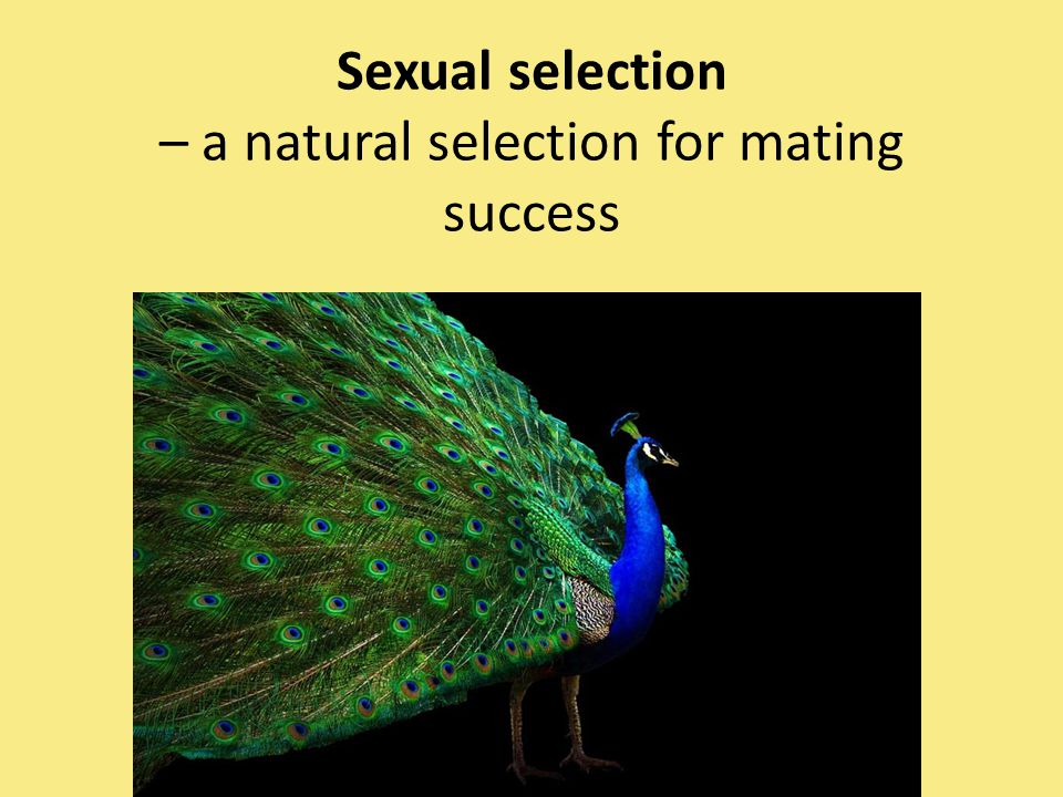 Sexual selection – a natural selection for mating success