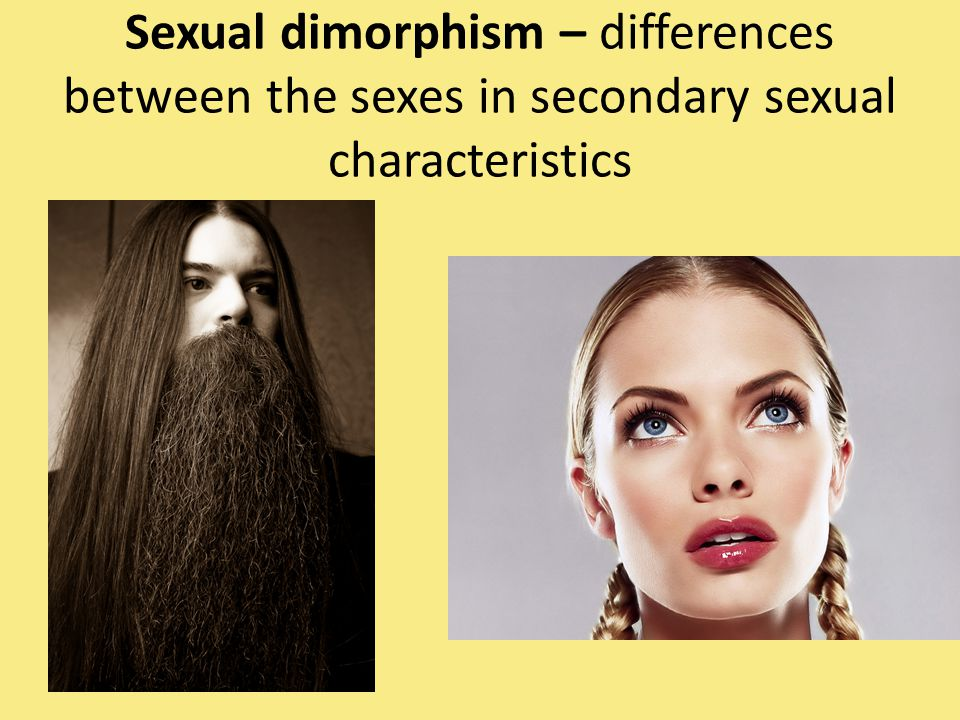 Sexual dimorphism – differences between the sexes in secondary sexual characteristics