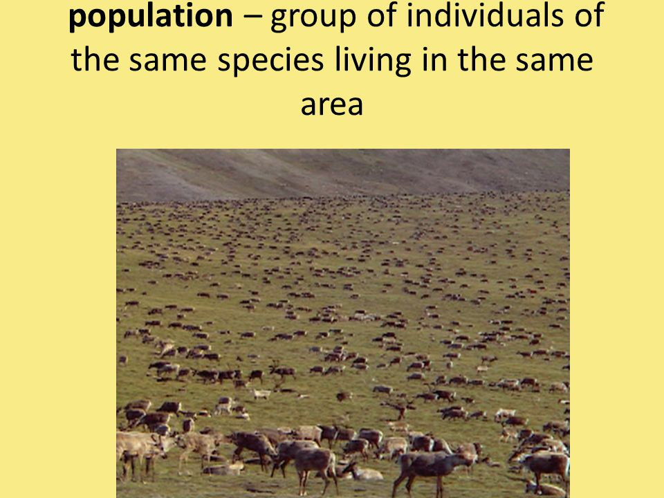 population – group of individuals of the same species living in the same area