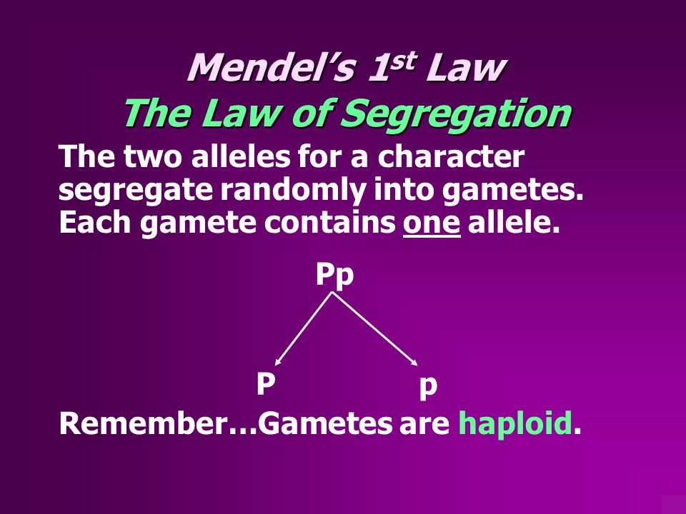 Mendel's 1st Law The Law of Segregation
