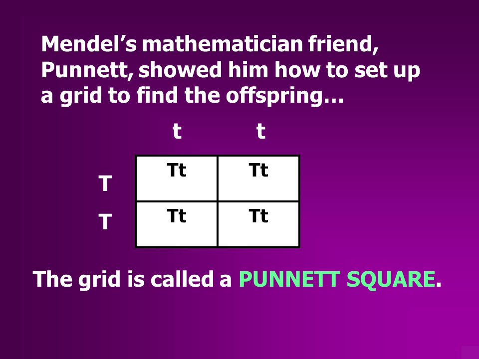 The grid is called a PUNNETT SQUARE.