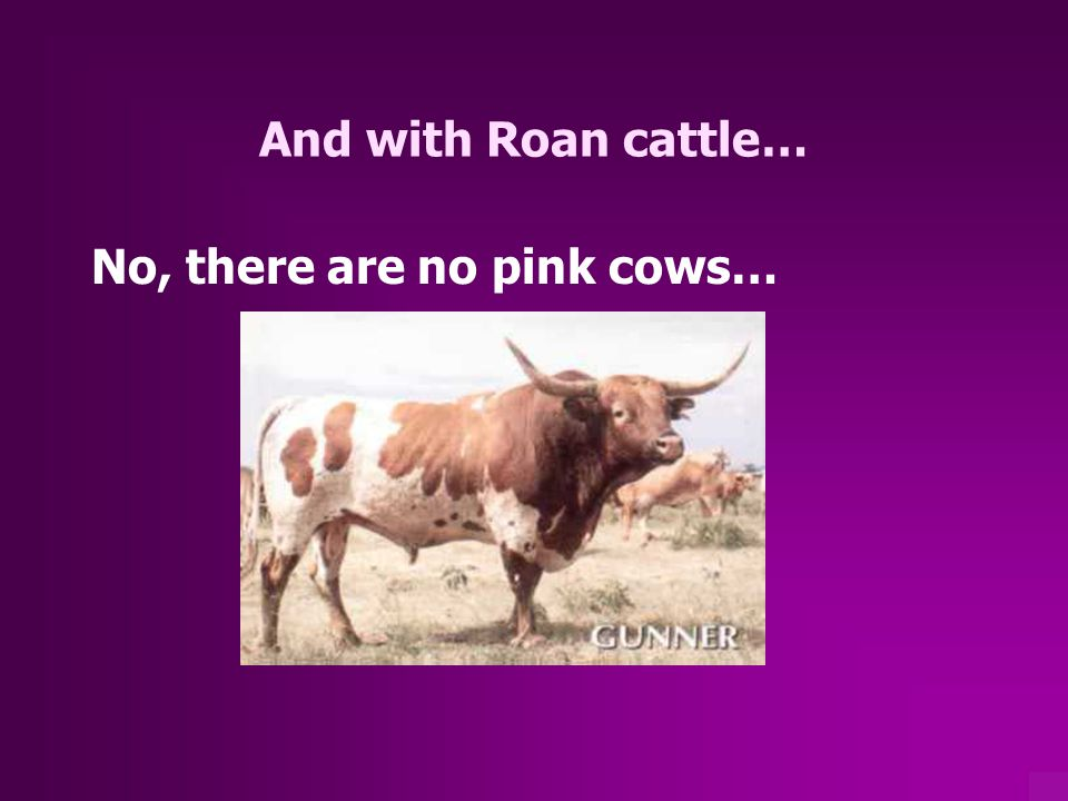 And with Roan cattle… No, there are no pink cows…