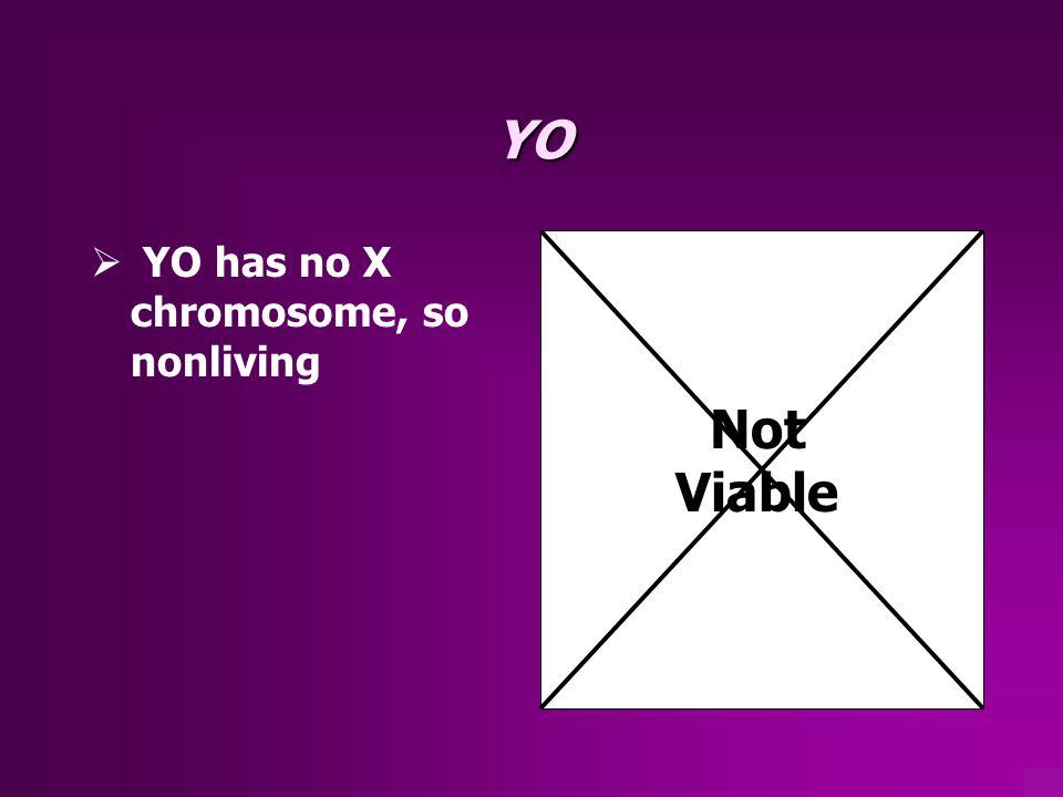 YO YO has no X chromosome, so nonliving Not Viable