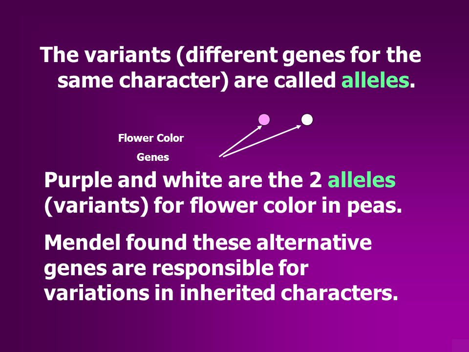 The variants (different genes for the same character) are called alleles.