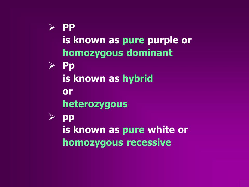 PP is known as pure purple or. homozygous dominant. Pp. is known as hybrid. or. heterozygous. pp.