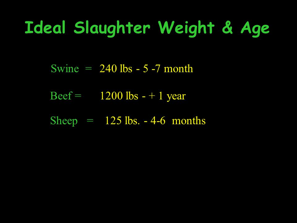 Ideal Slaughter Weight & Age