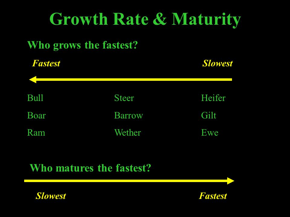 Growth Rate & Maturity Who grows the fastest Who matures the fastest