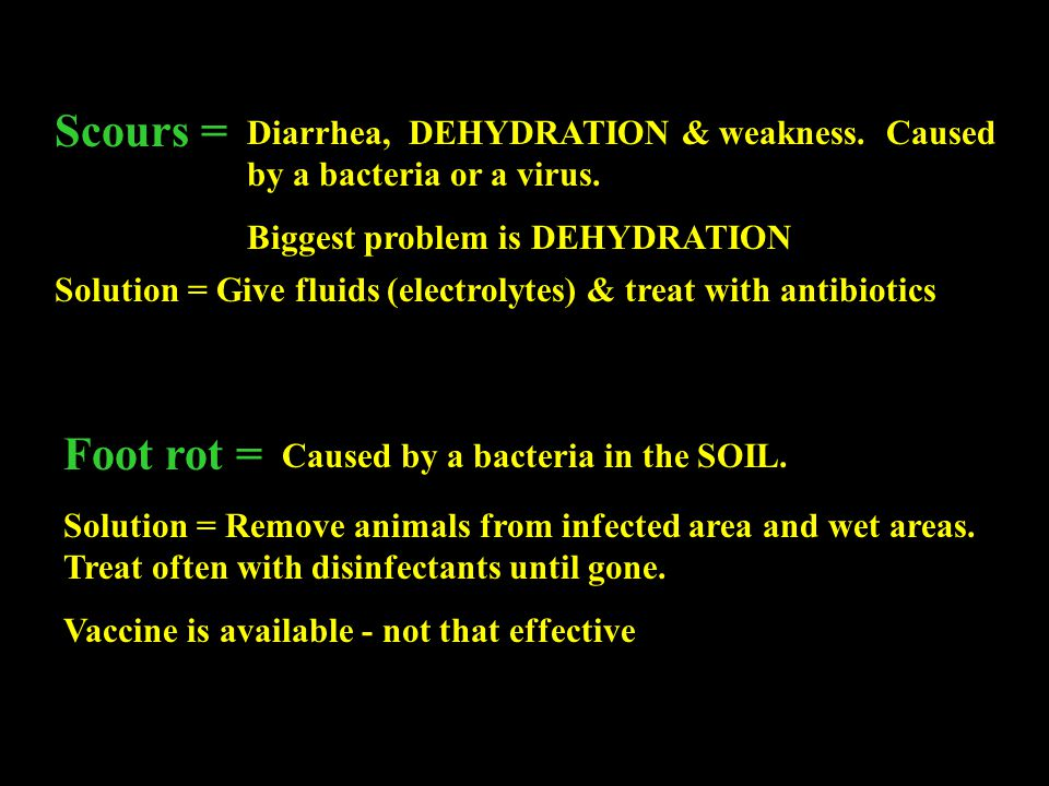 Scours = Diarrhea, DEHYDRATION & weakness. Caused by a bacteria or a virus. Biggest problem is DEHYDRATION.