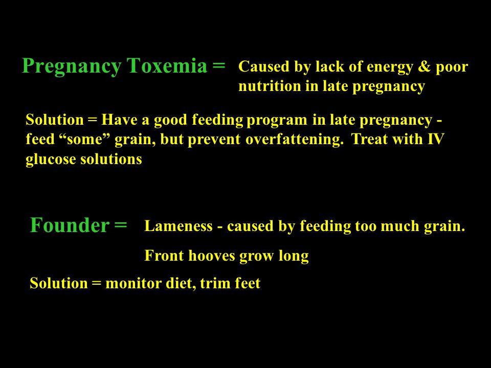 Pregnancy Toxemia = Founder =