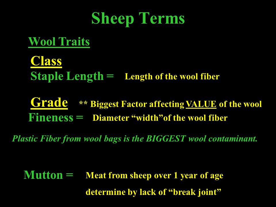 Sheep Terms Class Grade Wool Traits Staple Length = Fineness =