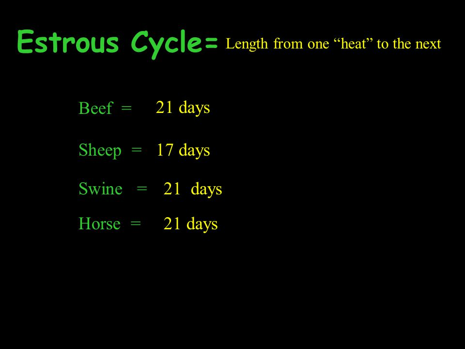 Estrous Cycle= Beef = 21 days Sheep = 17 days 21 days Horse = 21 days