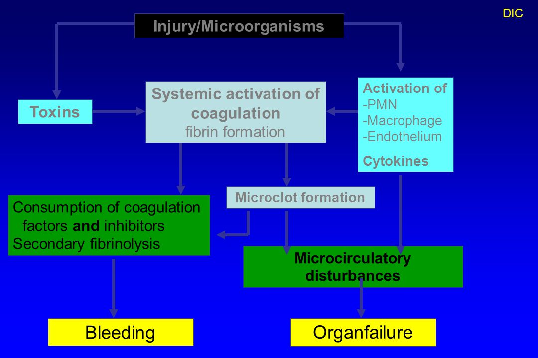 Injury/Microorganisms Microcirculatory disturbances