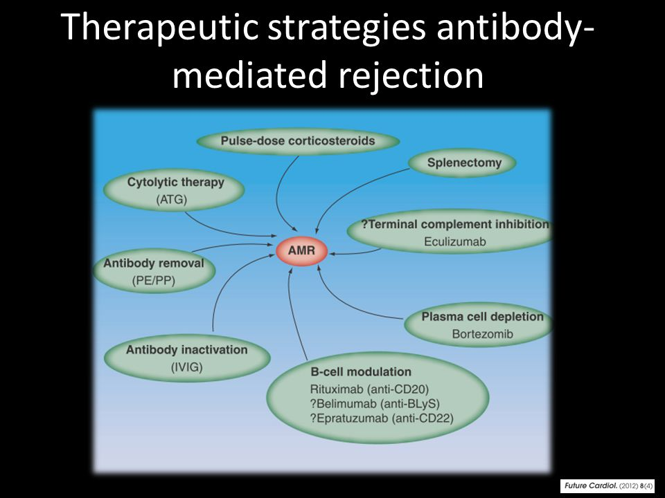Therapeutic strategies antibody-mediated rejection
