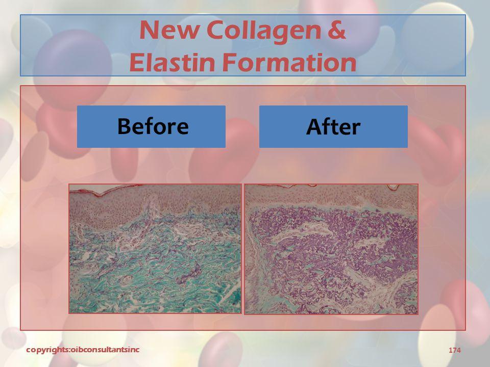 New Collagen & Elastin Formation