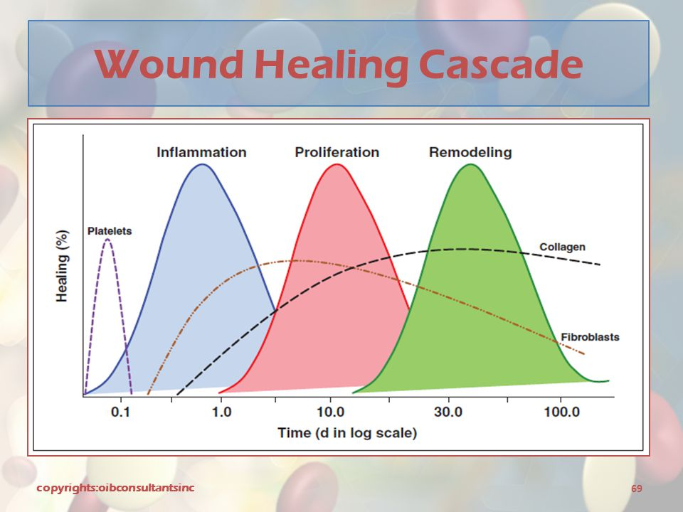 Wound Healing Cascade copyrights:oibconsultantsinc